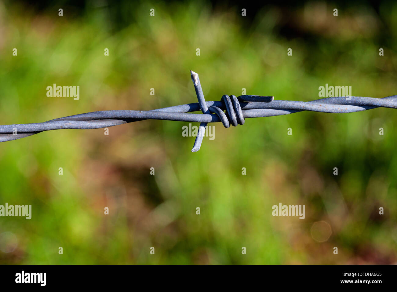 Close up of a barbed wire fence - Stock Image