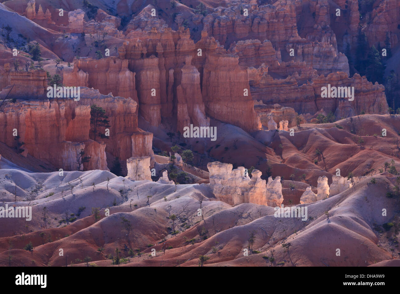 Soft light in Bryce Canyon illuminates whilte limestone hoodoos amidst the sand dunes on the valley floor. - Stock Image