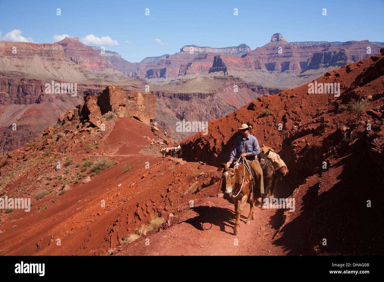 Pack mules on the South Kaibab Trail, Grand Canyon National Park, Arizona. - Stock Image