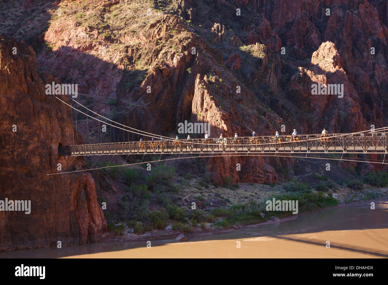 Pack mules cross the suspension bridge and tunnel on the South Kaibab Trail at the bottom of Grand Canyon National Park, Arizona - Stock Image