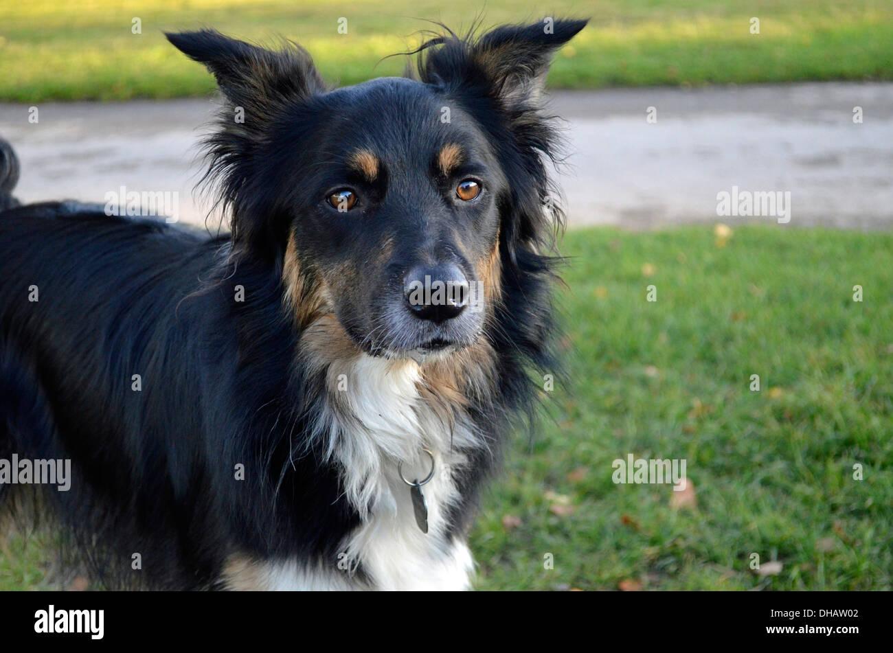 Tan And White Dog Stock Photos & Tan And White Dog Stock