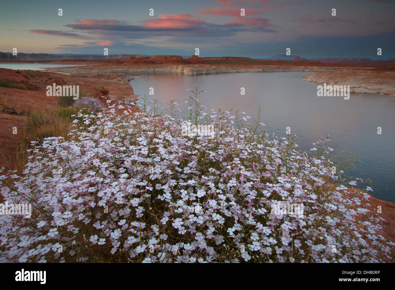 Lake Powell, Glen Canyon National Recreation Area, Arizona. - Stock Image