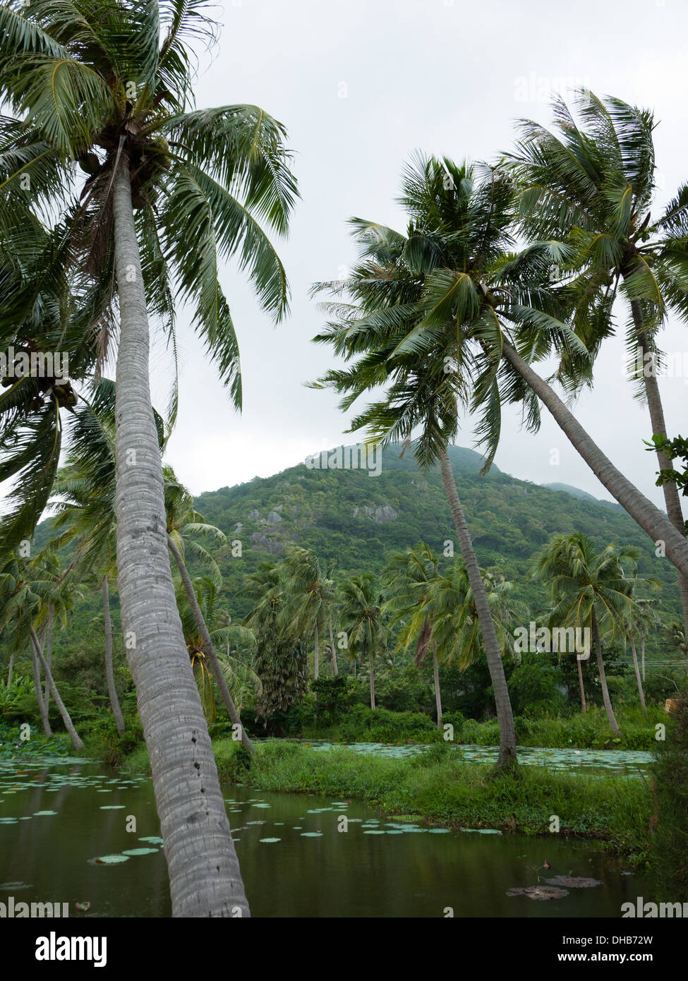 Tropical vegetation in the Con Dao National Park on Con Son Island, one of the Con Dao Islands, Vietnam. - Stock Image