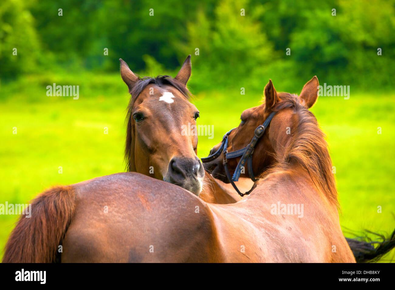 Horses, Ryde, Isle of Wight, United Kingdom - Stock Image