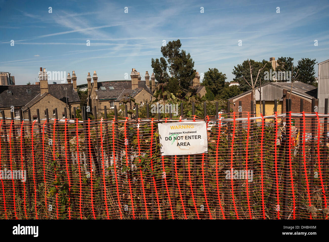 Japanese knotweed, Fallopia japonica behind a red plastice barier fence saying 'Do not Enter' in an East London suburb. - Stock Image