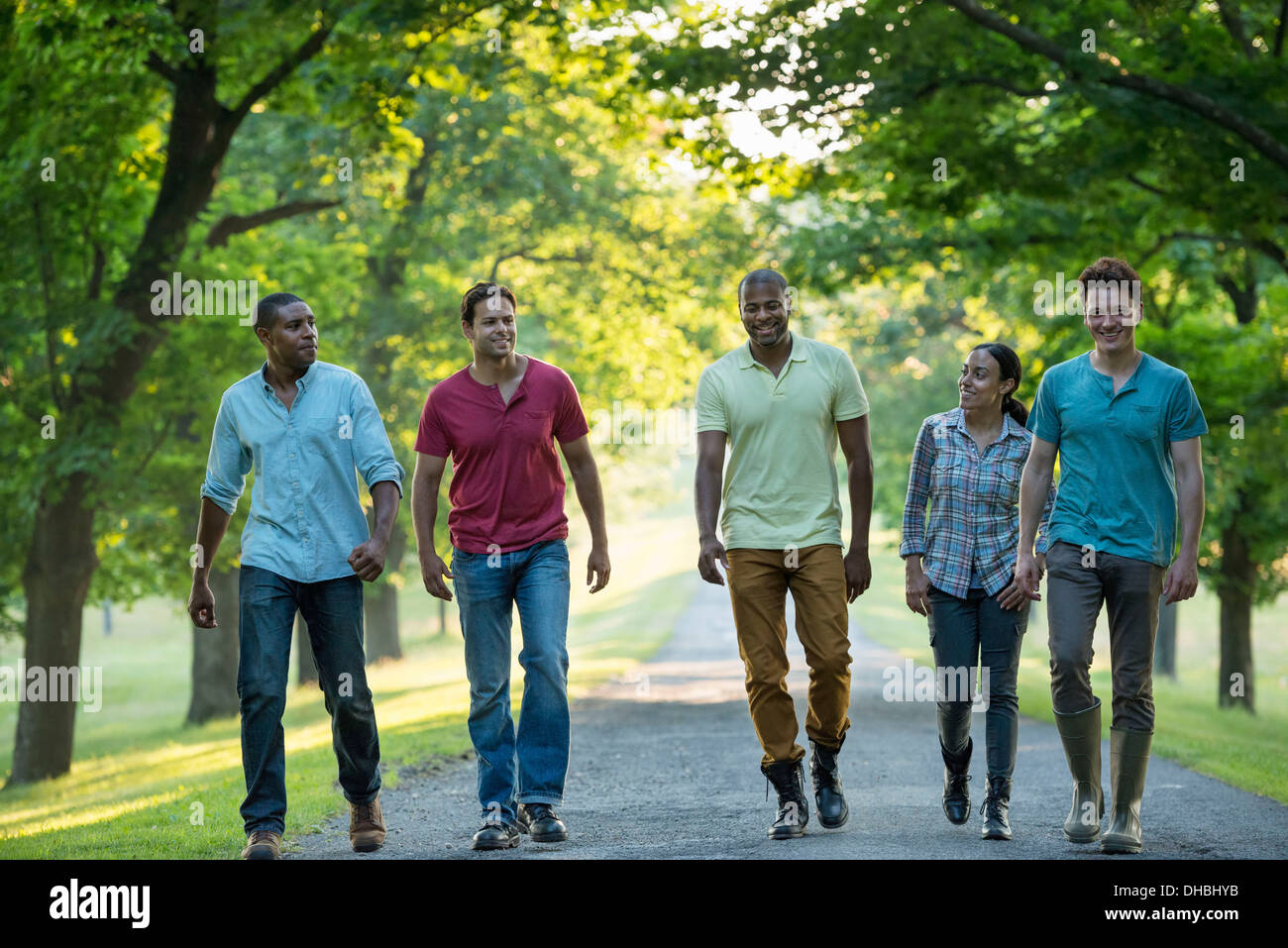 Five people walking down a tree lined avenue in the countryside. - Stock Image