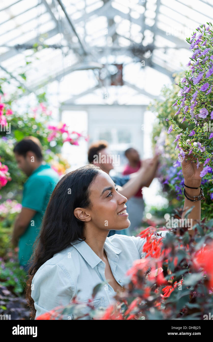A commercial greenhouse in a plant nursery growing organic flowers. A group of people working. - Stock Image