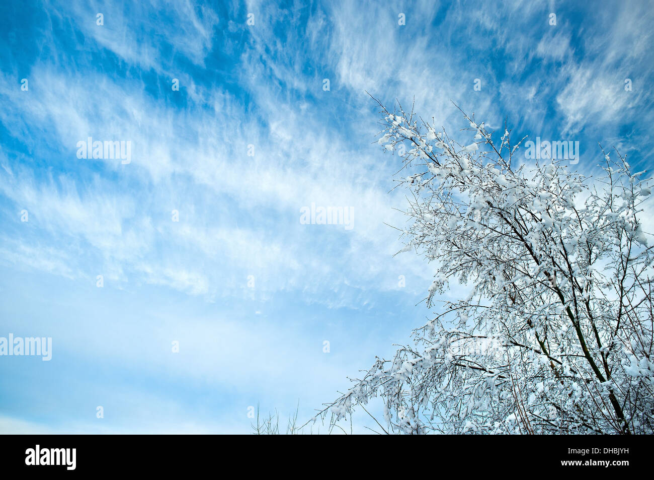 A treetop reaches for the sky - Stock Image