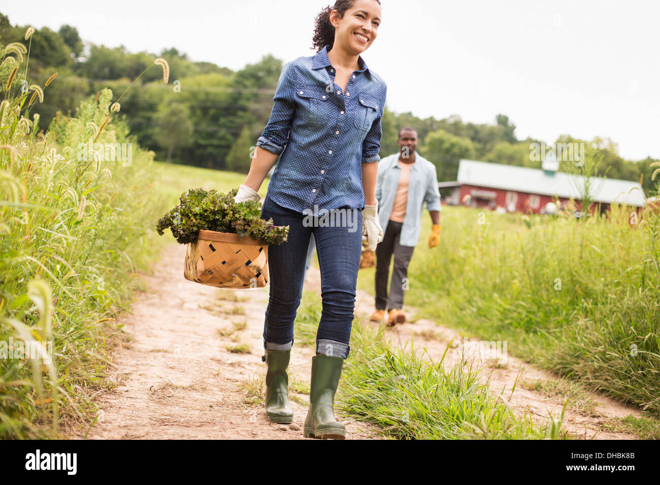 Two people working on an organic farm. Carrying baskets of fresh picked vegetables. - Stock Image