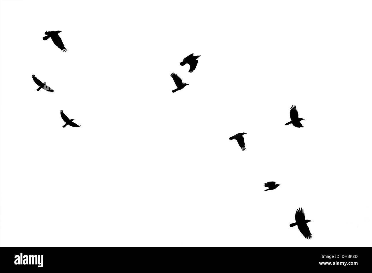 Flock of crows - Stock Image