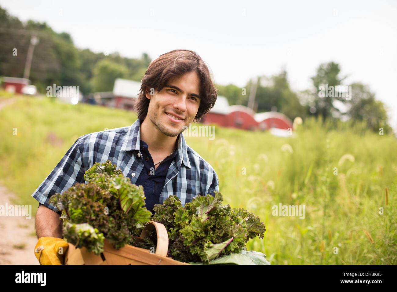 A man carrying a basket full of fresh picked organic vegetables, working on an organic farm. - Stock Image