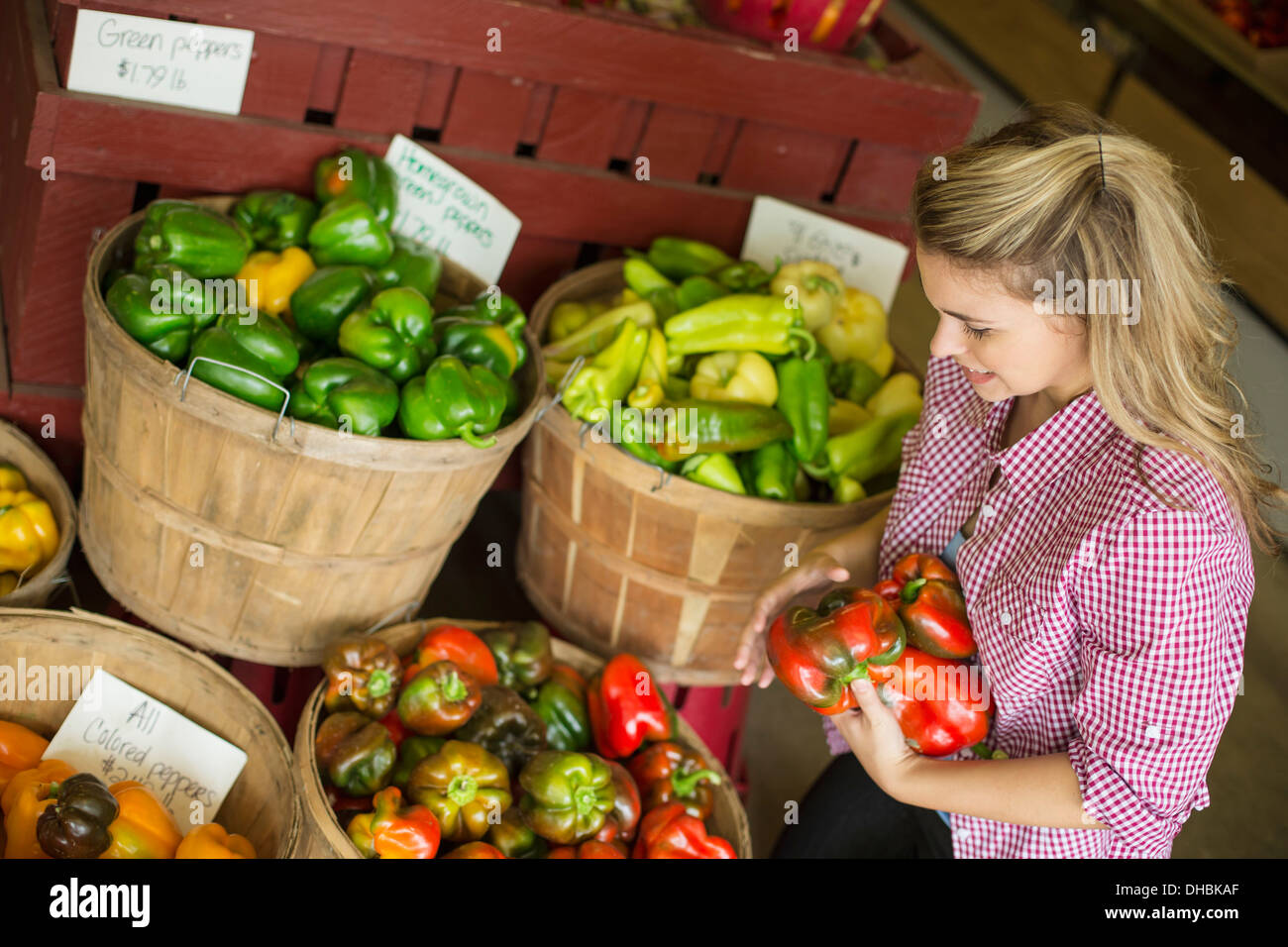 Working on an organic farm. A young blonde haired woman sorting different types of bell pepper for sale. - Stock Image