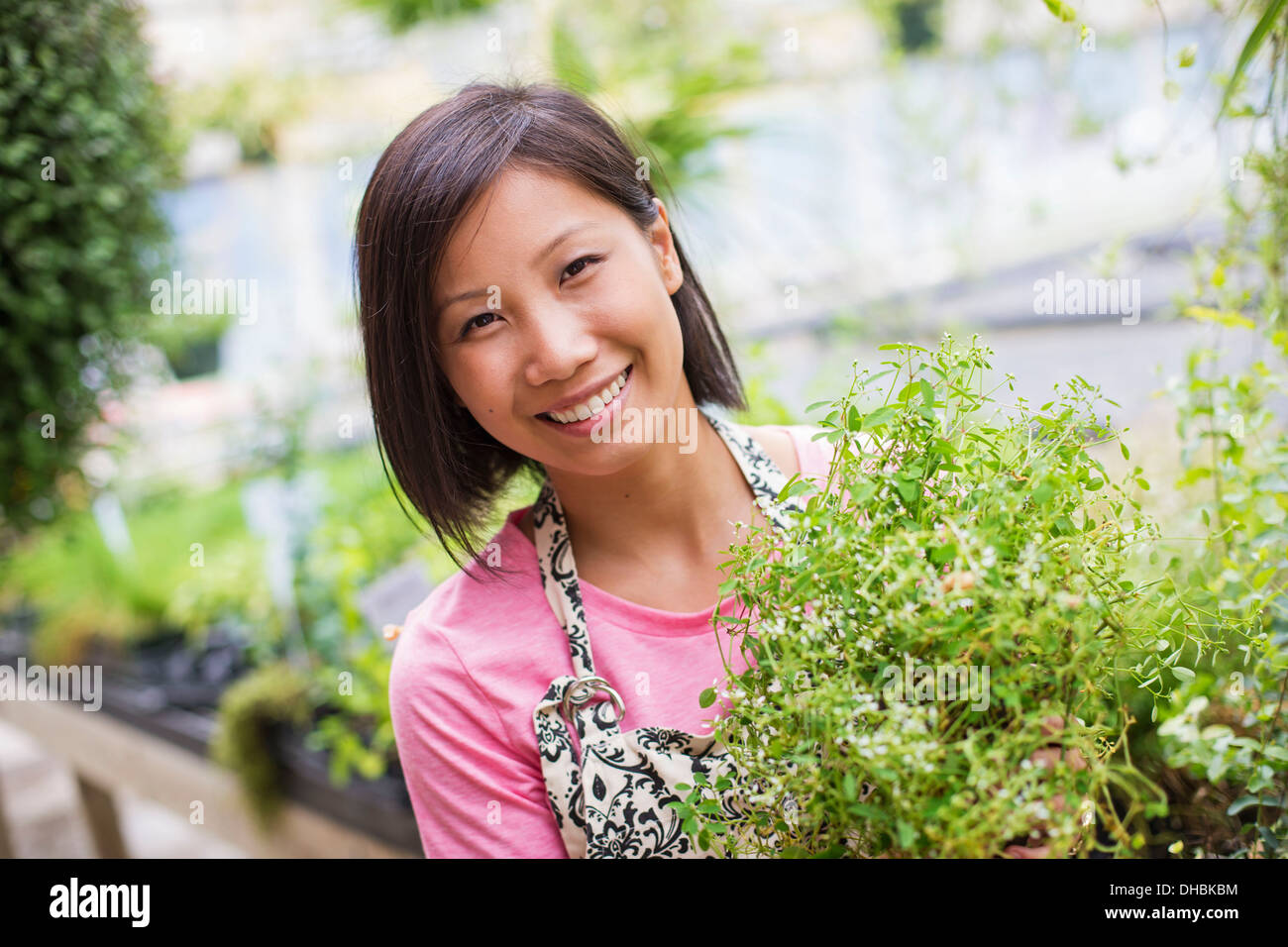 Working on an organic farm. A woman tending young plants in a glass house. - Stock Image