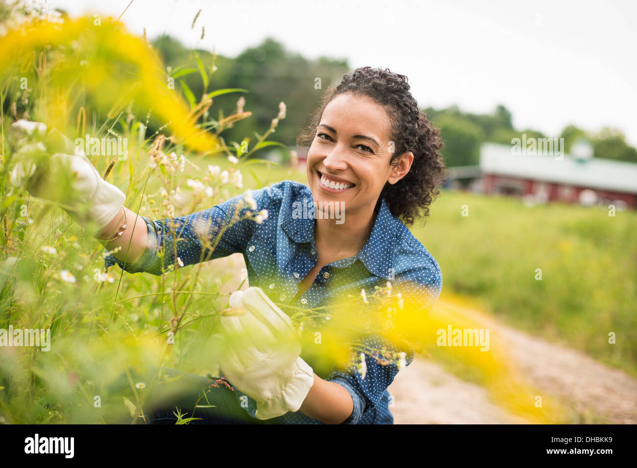 Woman working on an organic farm. Wearing gloves Admiring tall flowering plants. Stock Photo