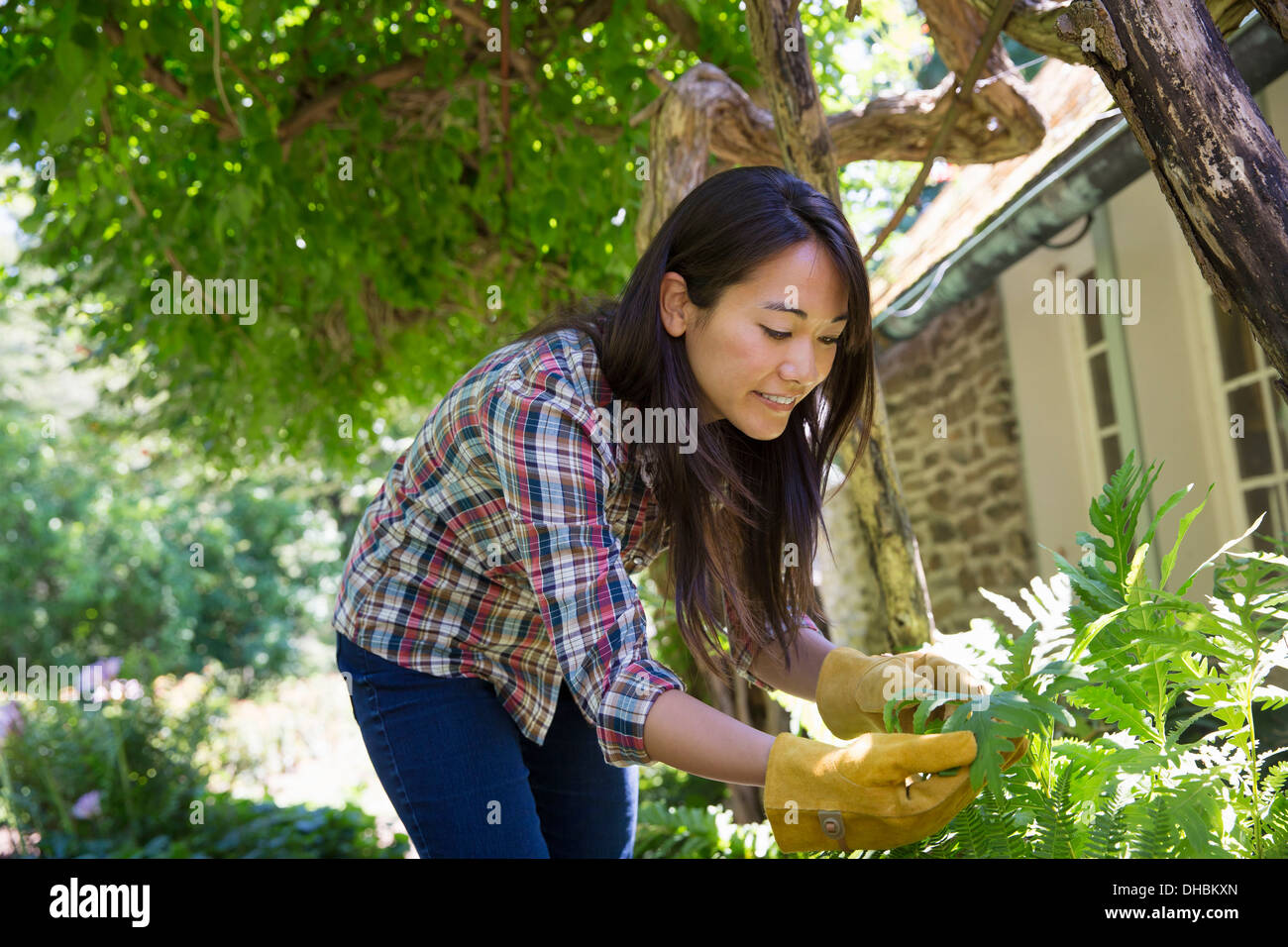 A farm growing and selling organic vegetables and fruit. A young woman working. - Stock Image