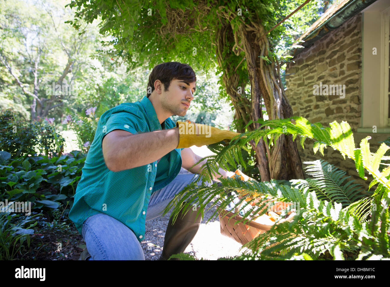 A farm growing and selling organic vegetables and fruit. A young man working. - Stock Image