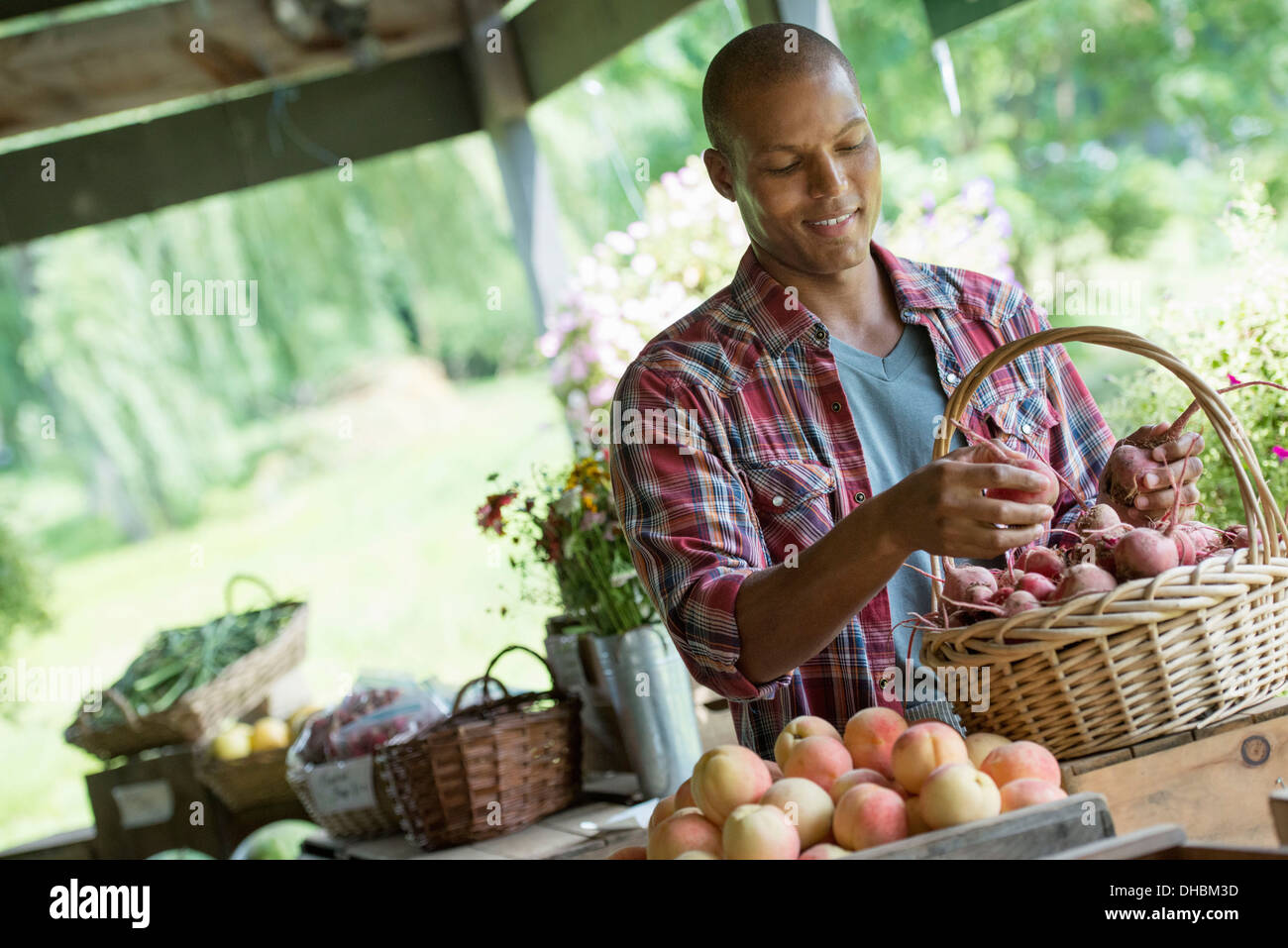 A farm stand with fresh organic vegetables and fruit.  A man sorting beetroot in a basket. Stock Photo