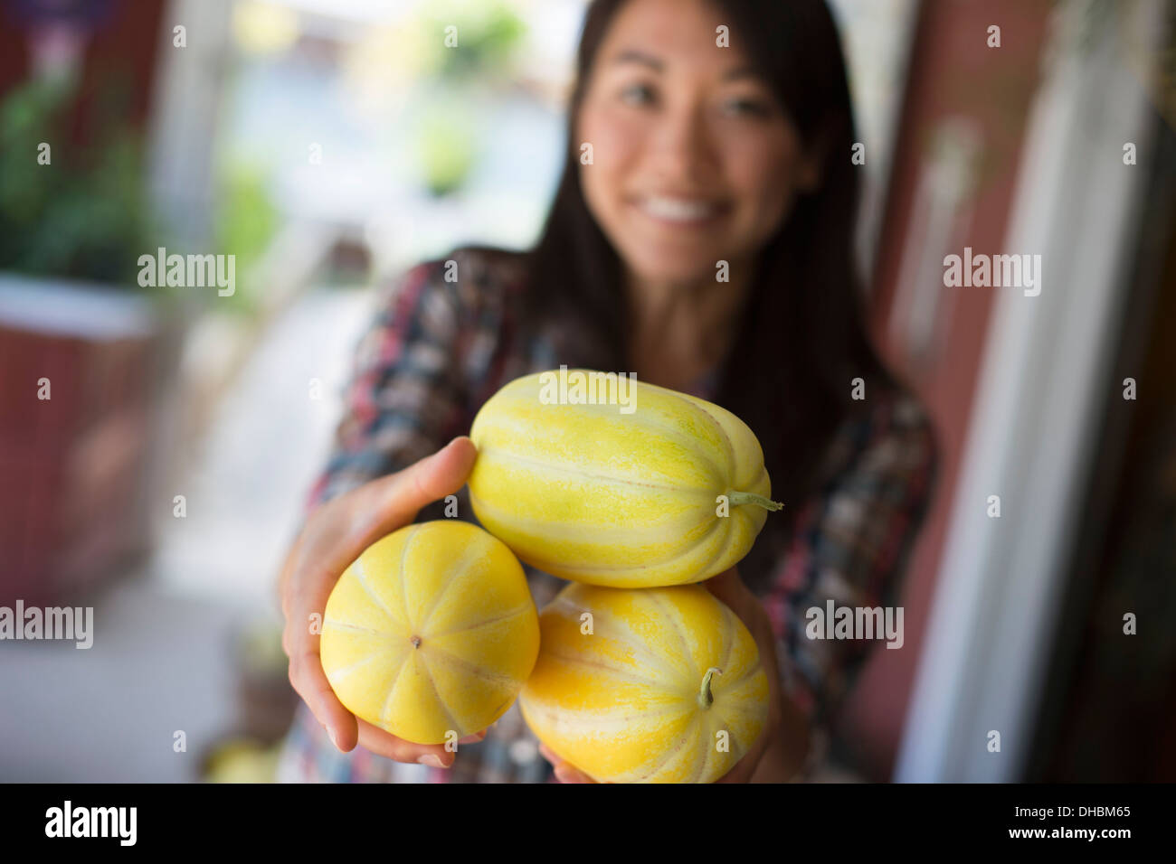 A farm growing and selling organic vegetables and fruit. A woman holding freshly harvested striped squashes. - Stock Image