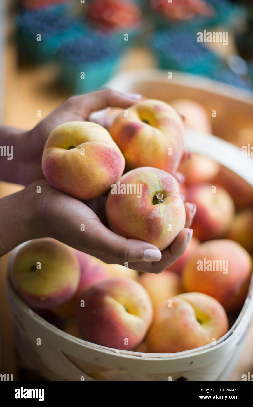 Organic fruit displayed on a farm stand. A person holding hands full of peaches. - Stock Image