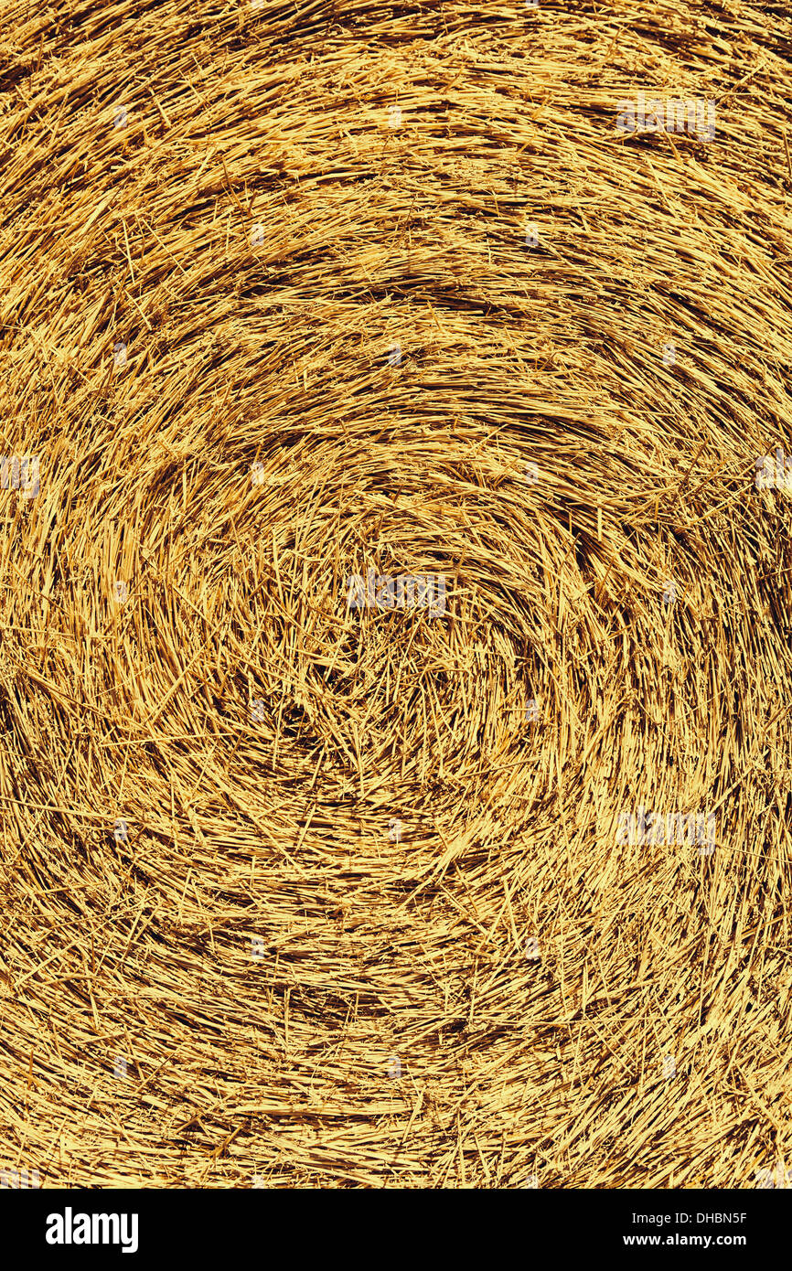 The centre of a bale of straw, tightly packed. - Stock Image