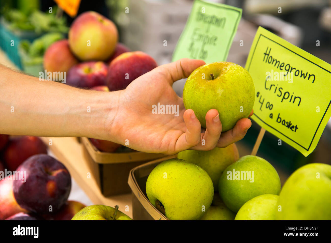 A farm stand with fresh fruit on display.  A person selecting apples. Stock Photo