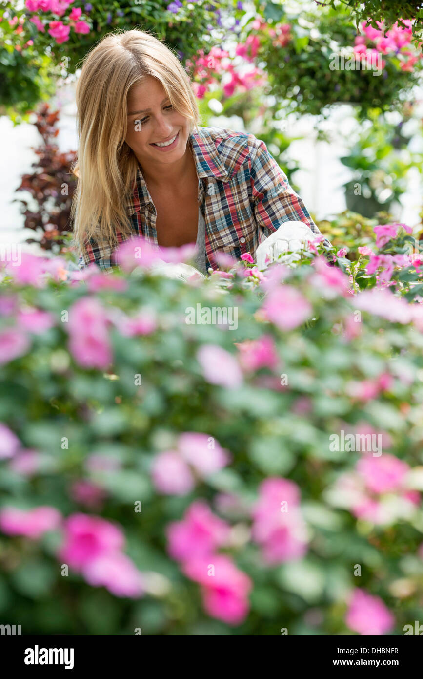A woman in a plant nursery surrounded by flowering plants and green foliage. - Stock Image