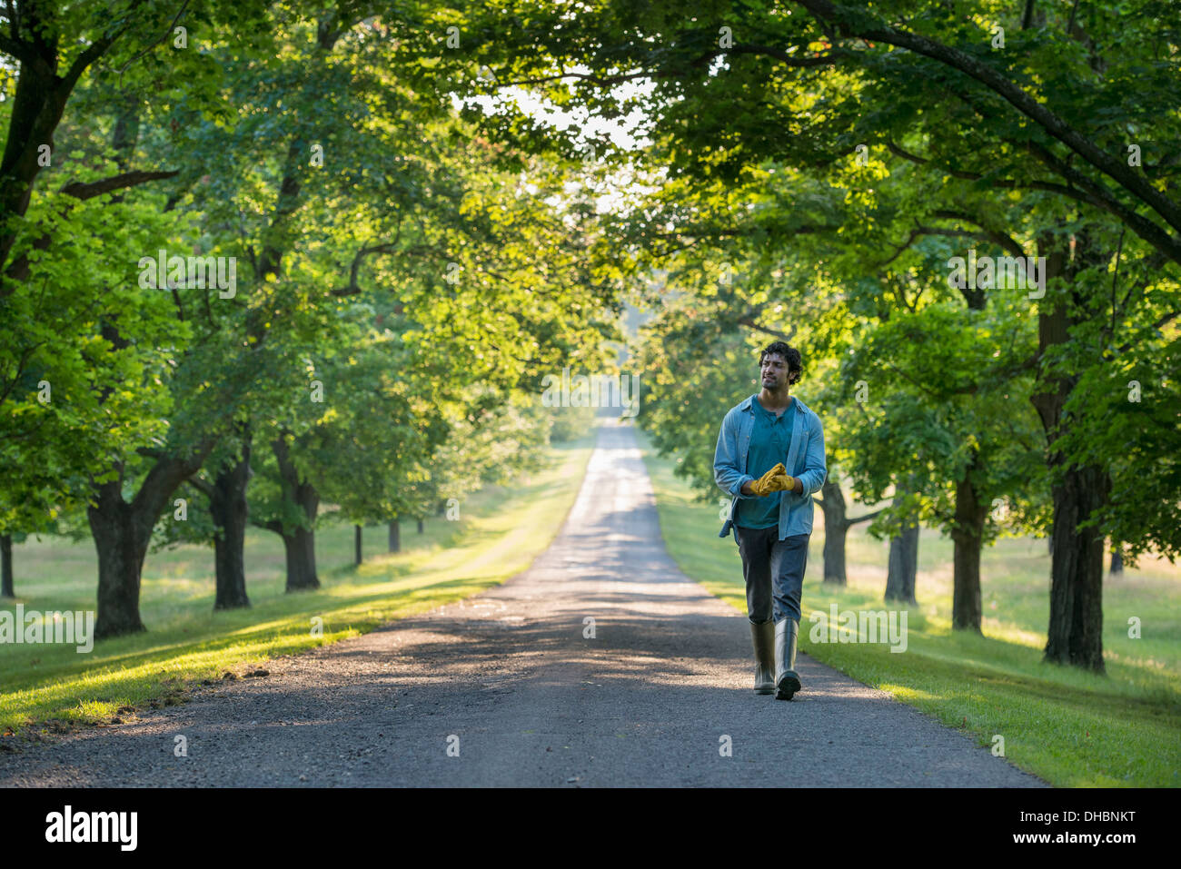 A man walking down a tree lined path. - Stock Image