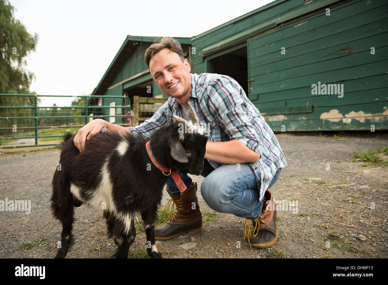 An organic farm in the Catskills. A man with a small goat on a halter. Stock Photo