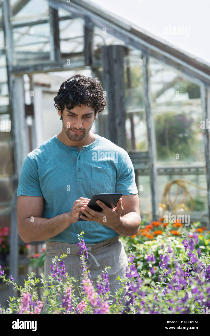 A young man working in a plant nursery, surrounded by flowering plants. - Stock Image