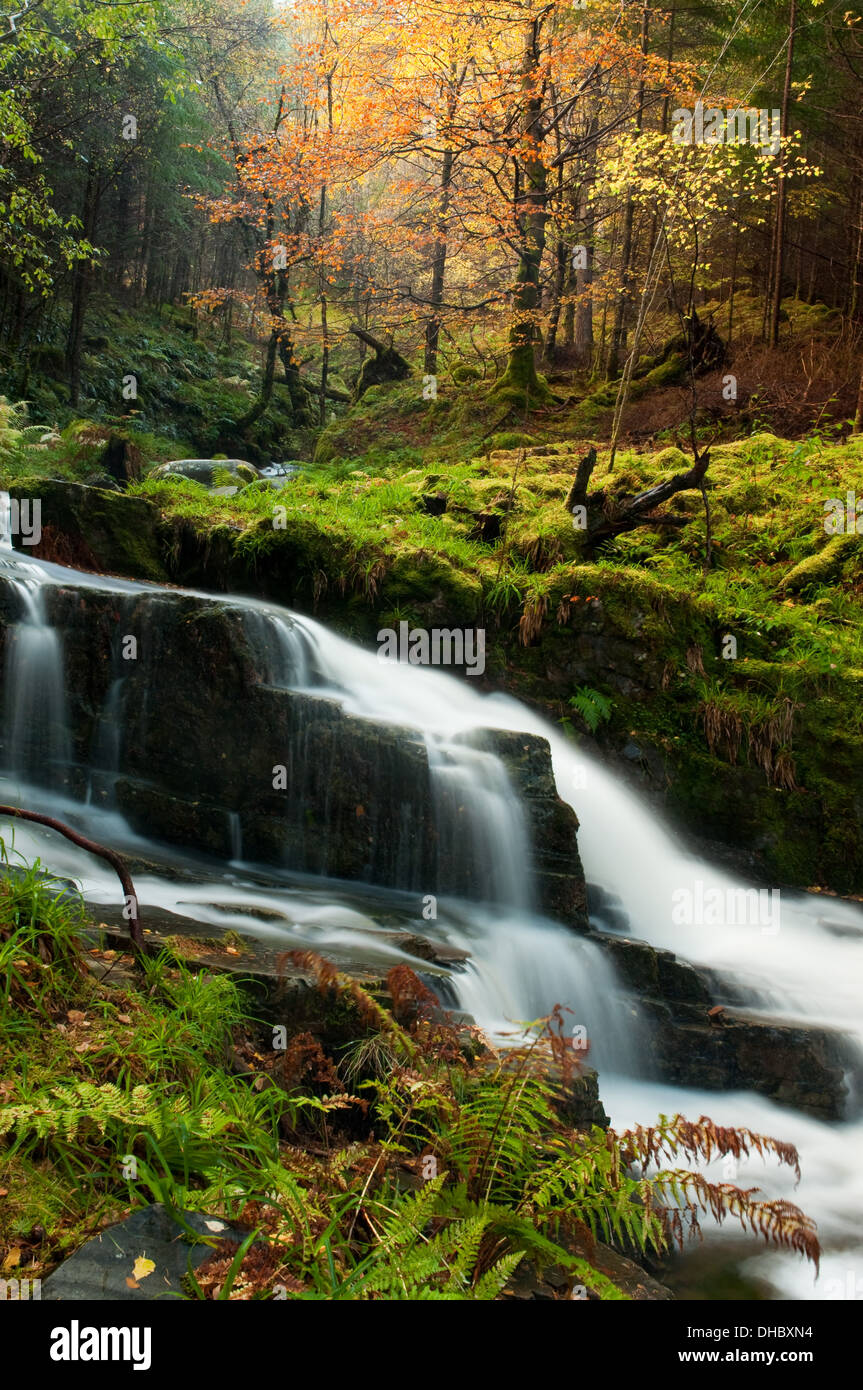 Waterfall through Lael Forest Stock Photo