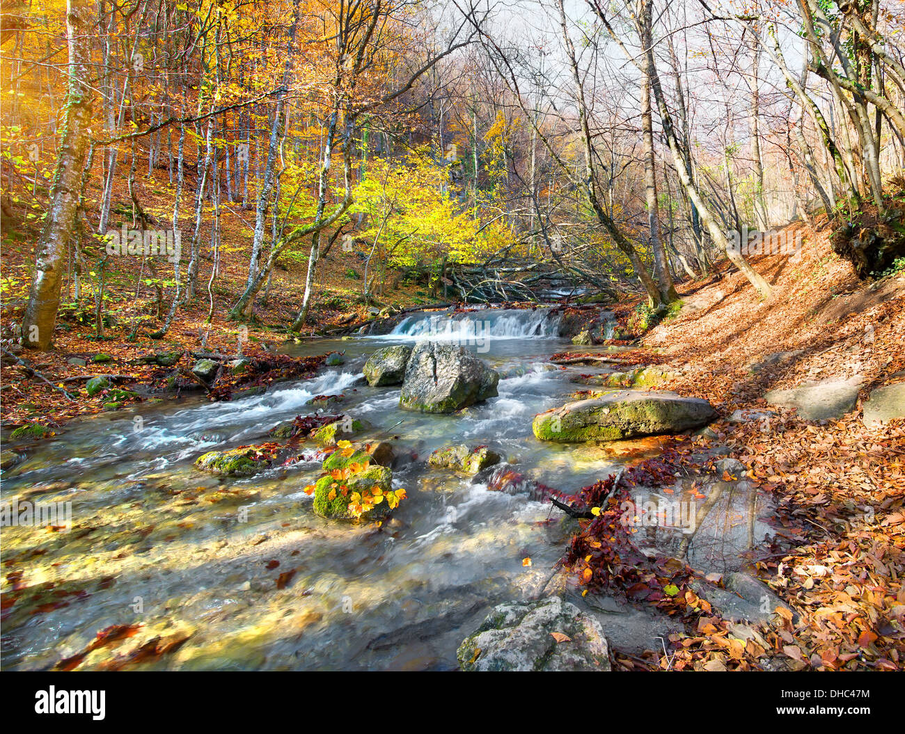 Beautiful fast river in mountain forest at sunrise - Stock Image