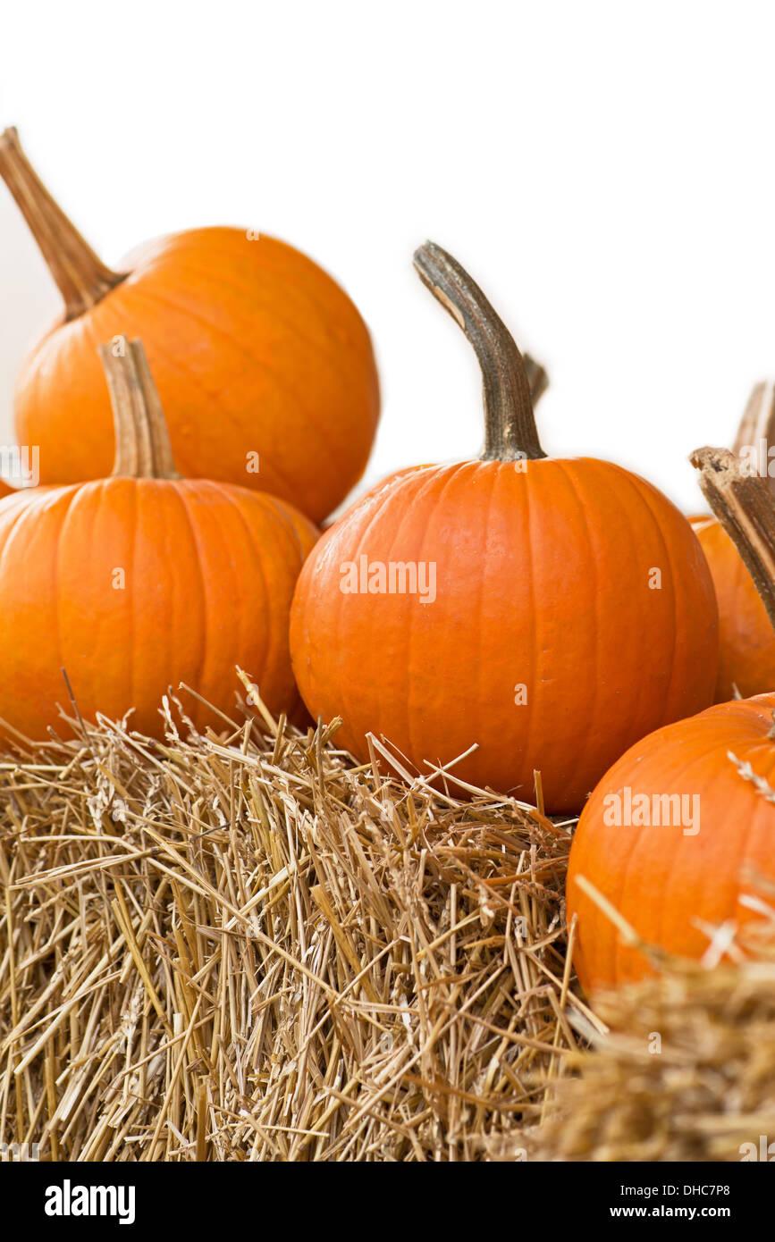 Fresh pumpkins lined along a pumpkin patch. - Stock Image