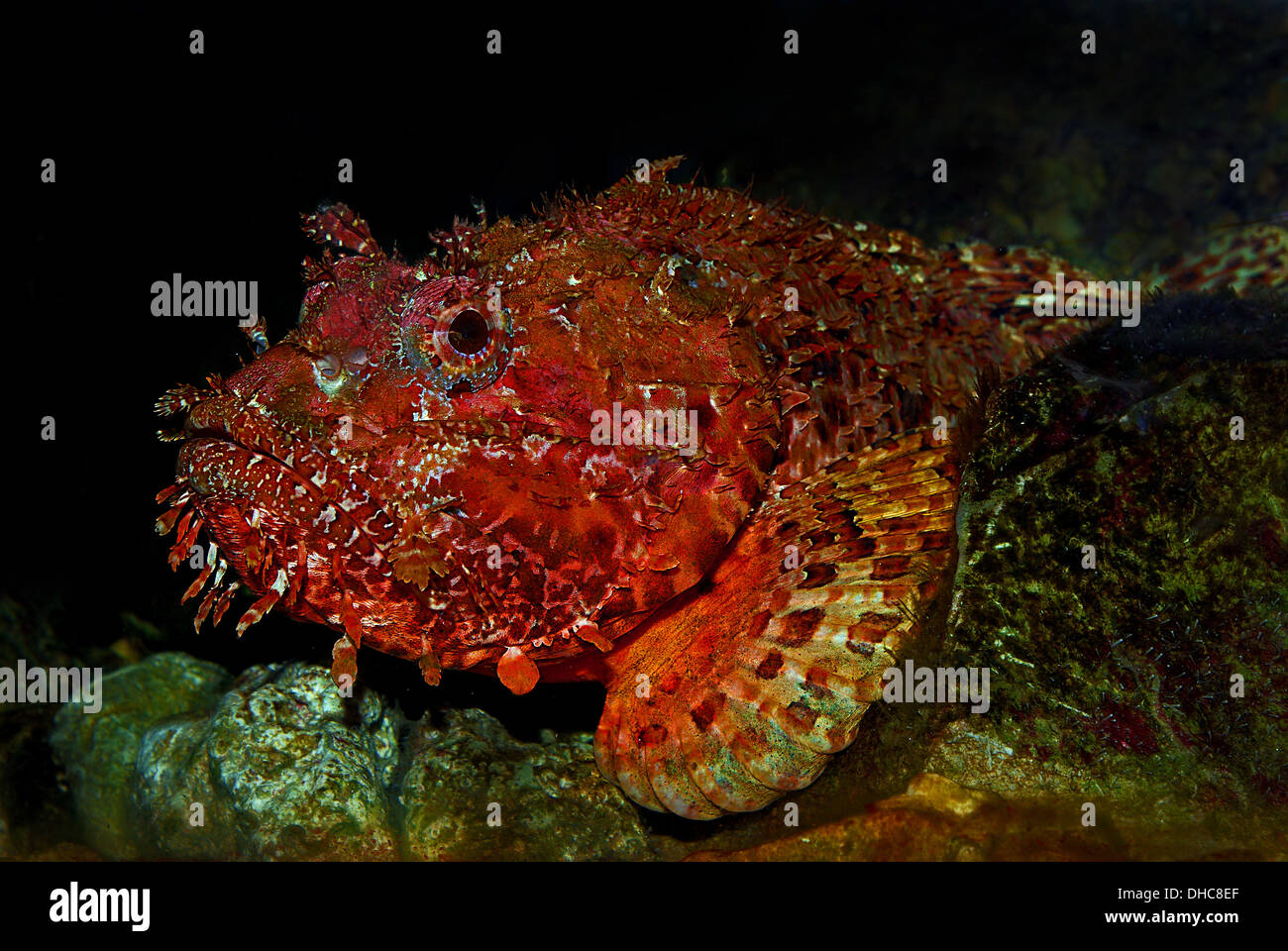 Red Spotted Fish Stock Photos & Red Spotted Fish Stock Images - Alamy