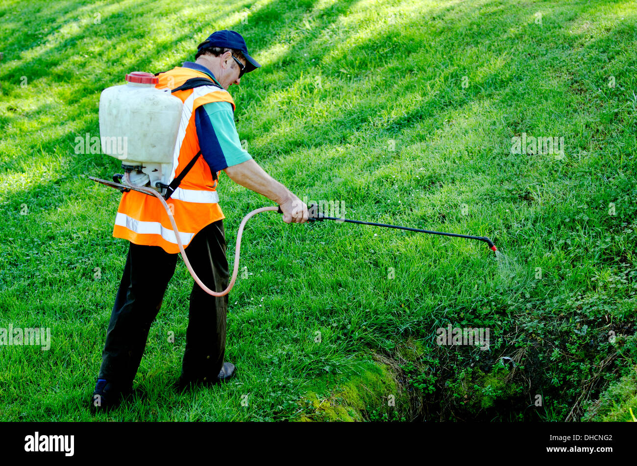 Worker Sprays Weeds And Plants In A Green Grassy Lawn In A City Garden    Stock