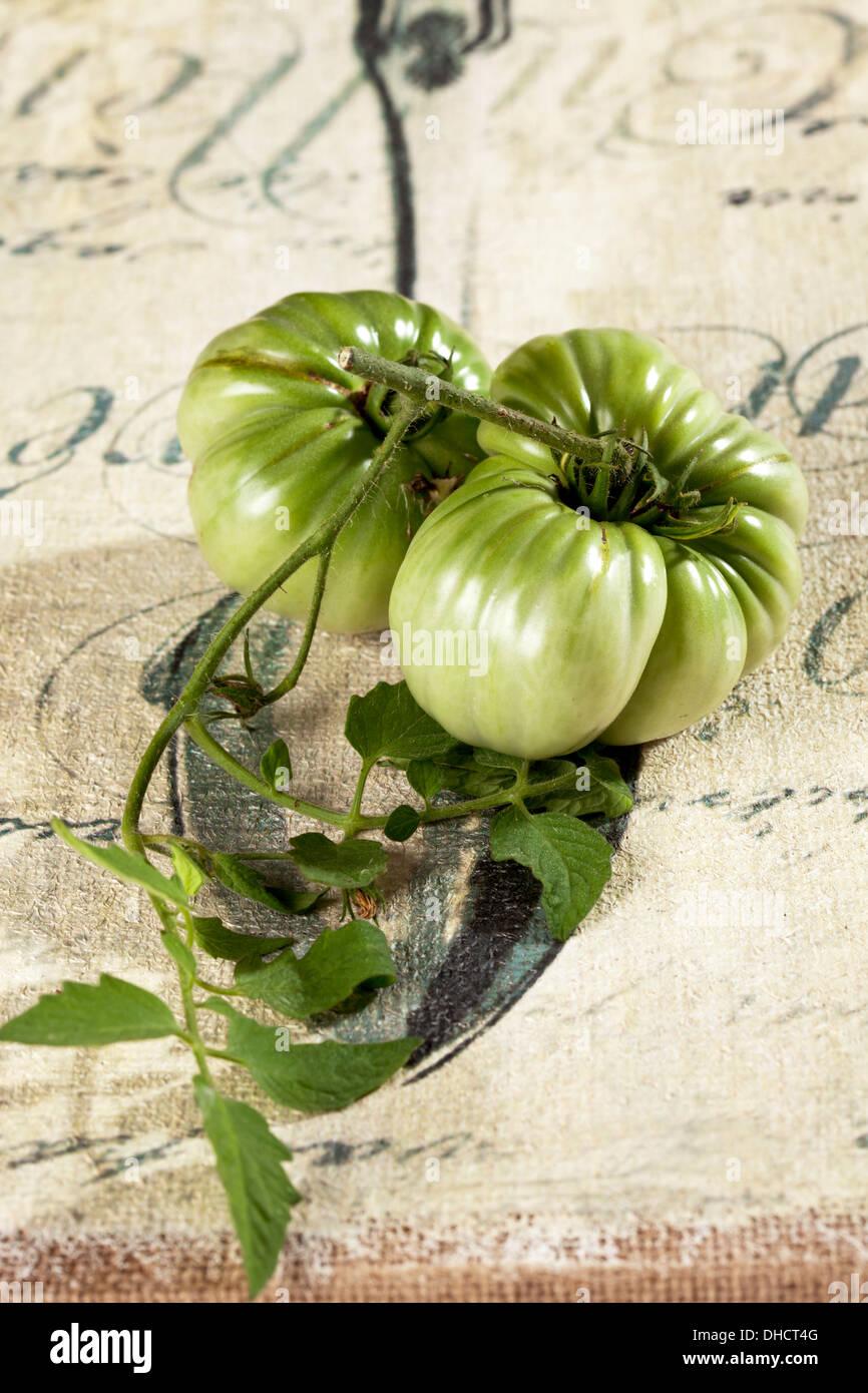 Unripe green beef tomatos (Solanum lycopersicum) - Stock Image