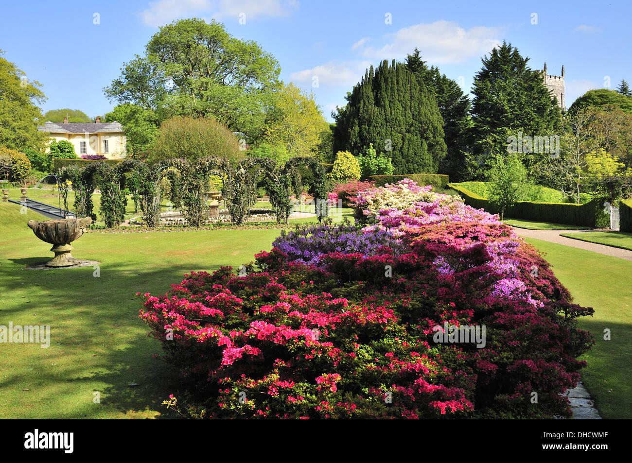 Azaleas in the formal Victorian garden Arlington Court - Stock Image