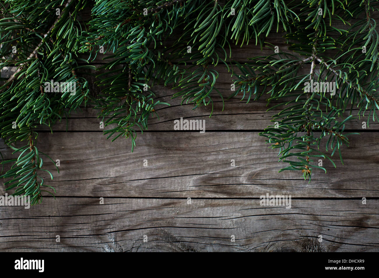 fir tree christmas background - Stock Image
