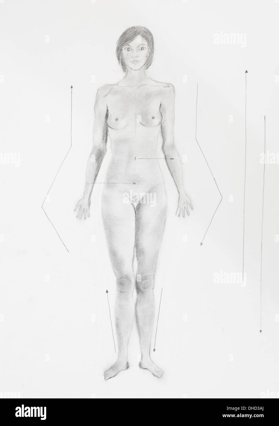 Woman Anatomy Sketch Stock Photos & Woman Anatomy Sketch Stock ...