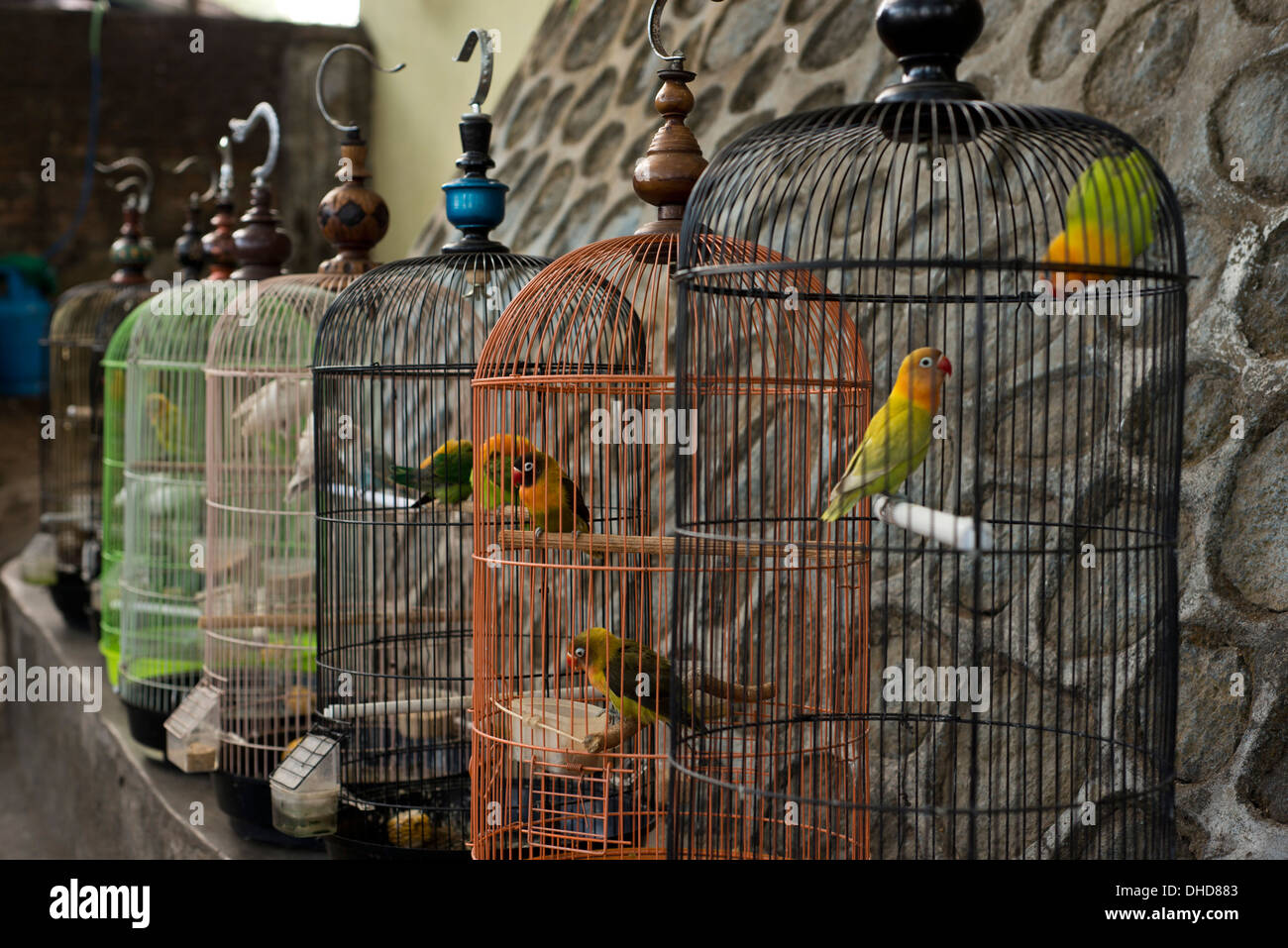 In The Cage: birds sells at the traditional birth market in Malang Indonesia - Stock Image