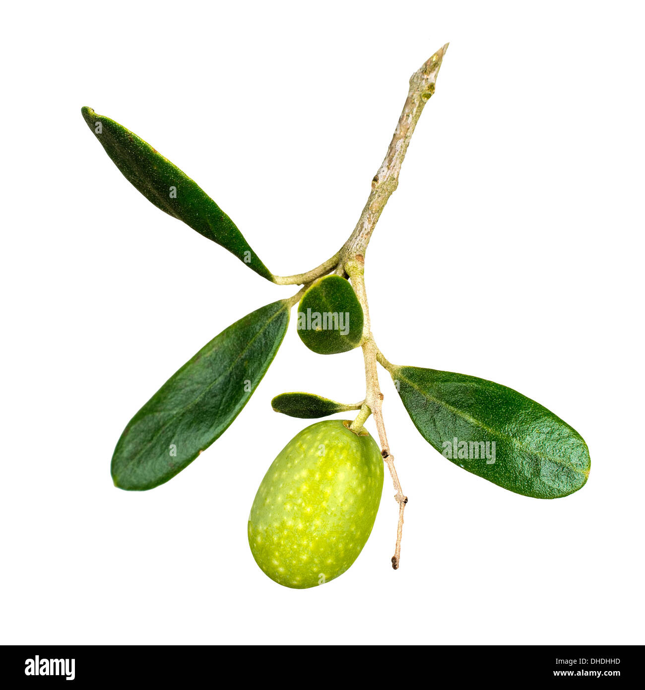 Natural ripening olive. - Stock Image