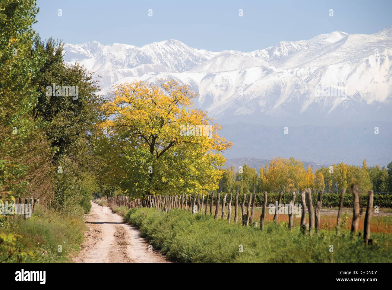 Country Farm Road With Snow Capped Mountains In The Background And Trees Golden Colours Mendoza Argentina