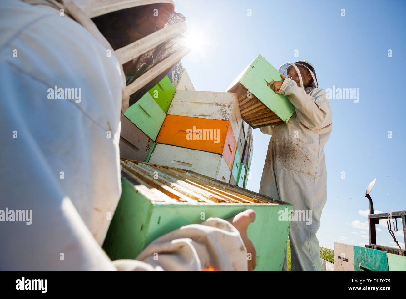 Beekeepers Unloading Honeycomb Boxes From Truck - Stock Image