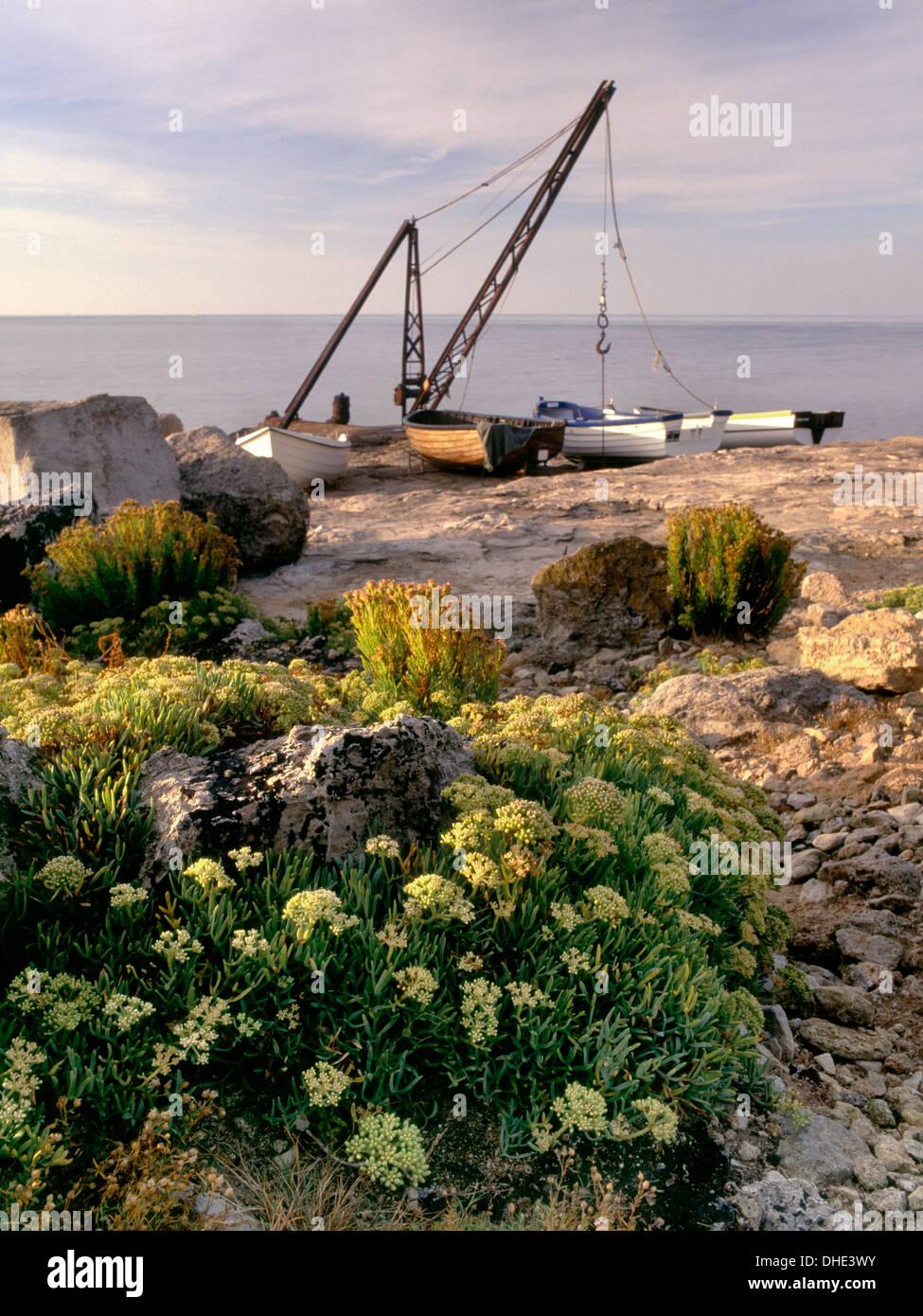 Rock Samphire, Crithmum maritimum, and boat crane at Portland Bill, Dorset Stock Photo