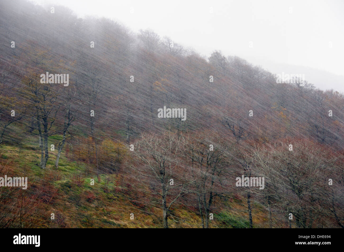 Snow blizzard sweeping wooded ridge in the Pyrenees mountains in late autumn, Roncesvalles, Navarre, Spain, November. Stock Photo