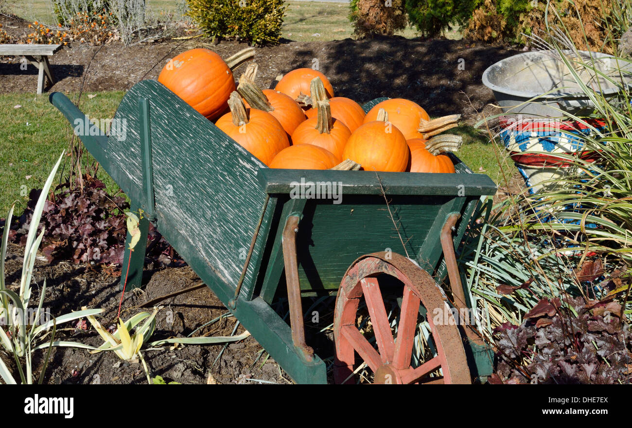 Autumn New England scene of old wooden wheelbarrow filled with orange pumpkins in garden. USA - Stock Image