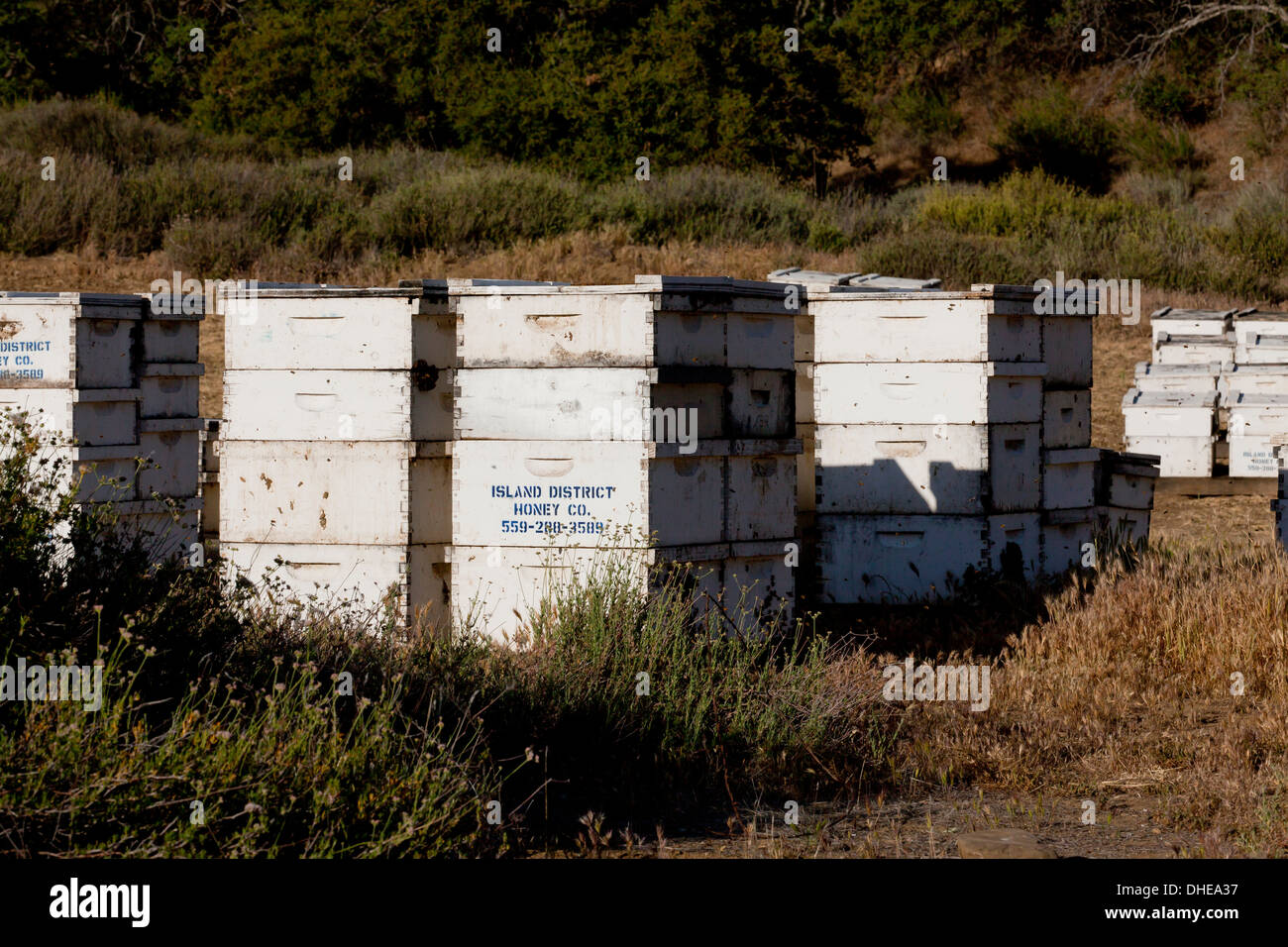 Commercial beehives stacked near an orchard - Central California USA - Stock Image
