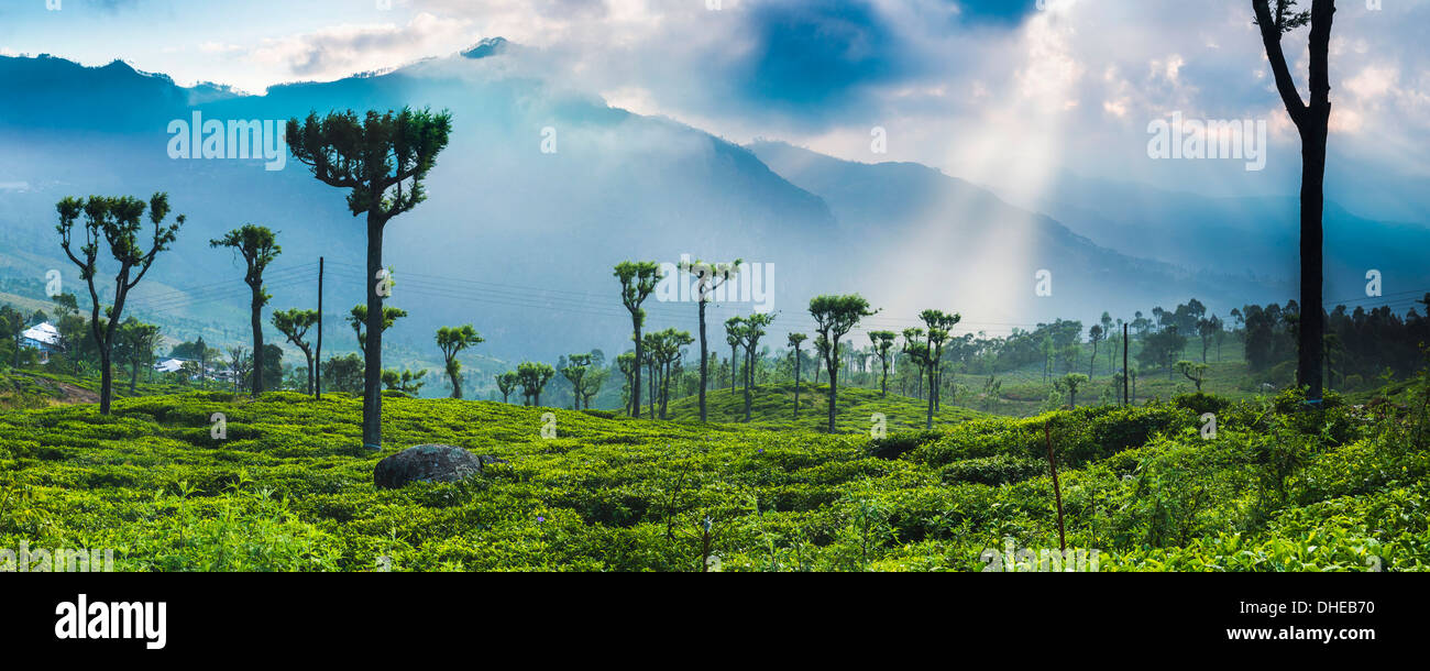 Sunrise over tea plantations and mountains, Haputale, Sri Lanka Hill Country, Central Highlands, Sri Lanka, Asia - Stock Image