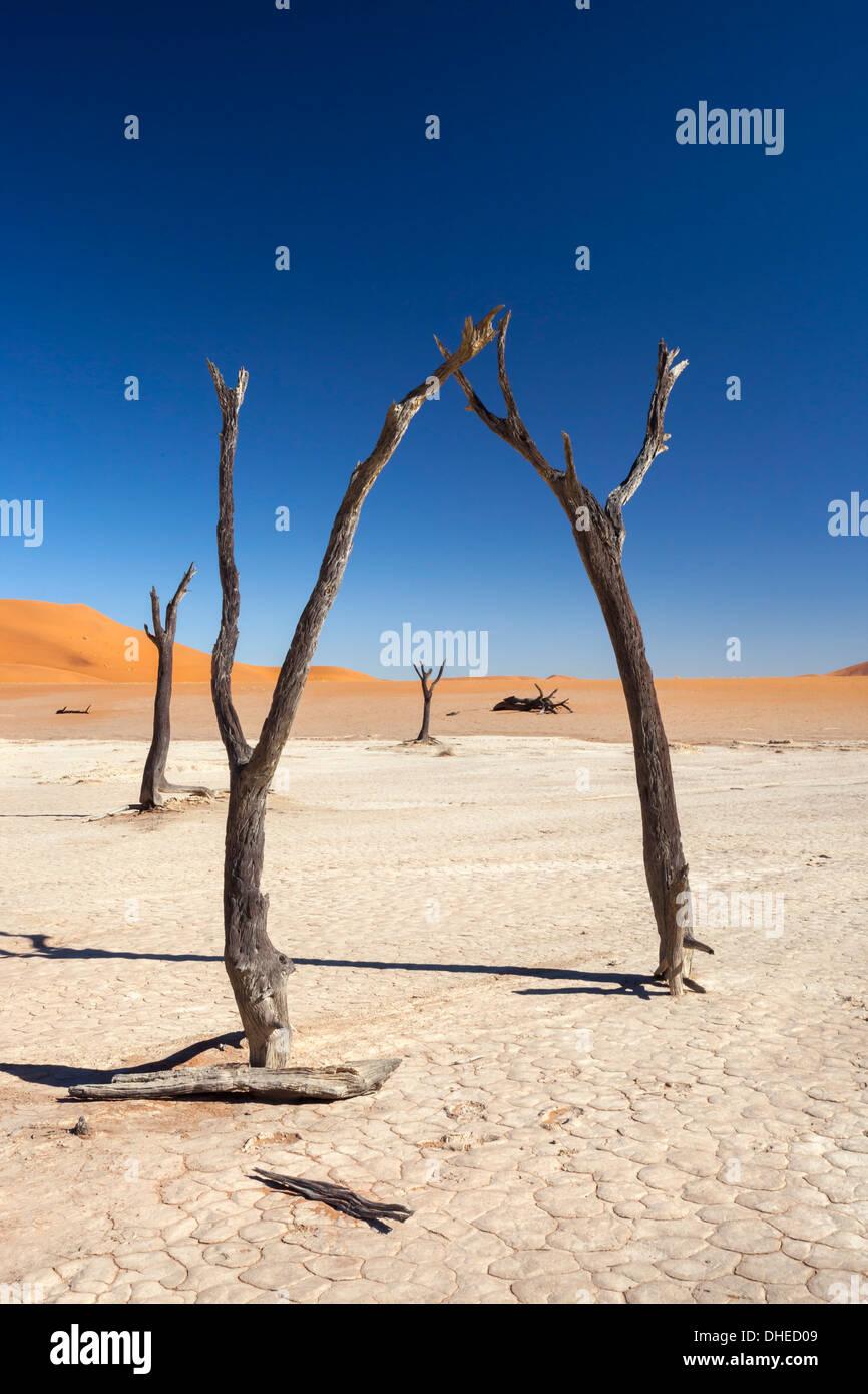 Dead Vlei, Namib Desert, Namibia, Africa - Stock Image