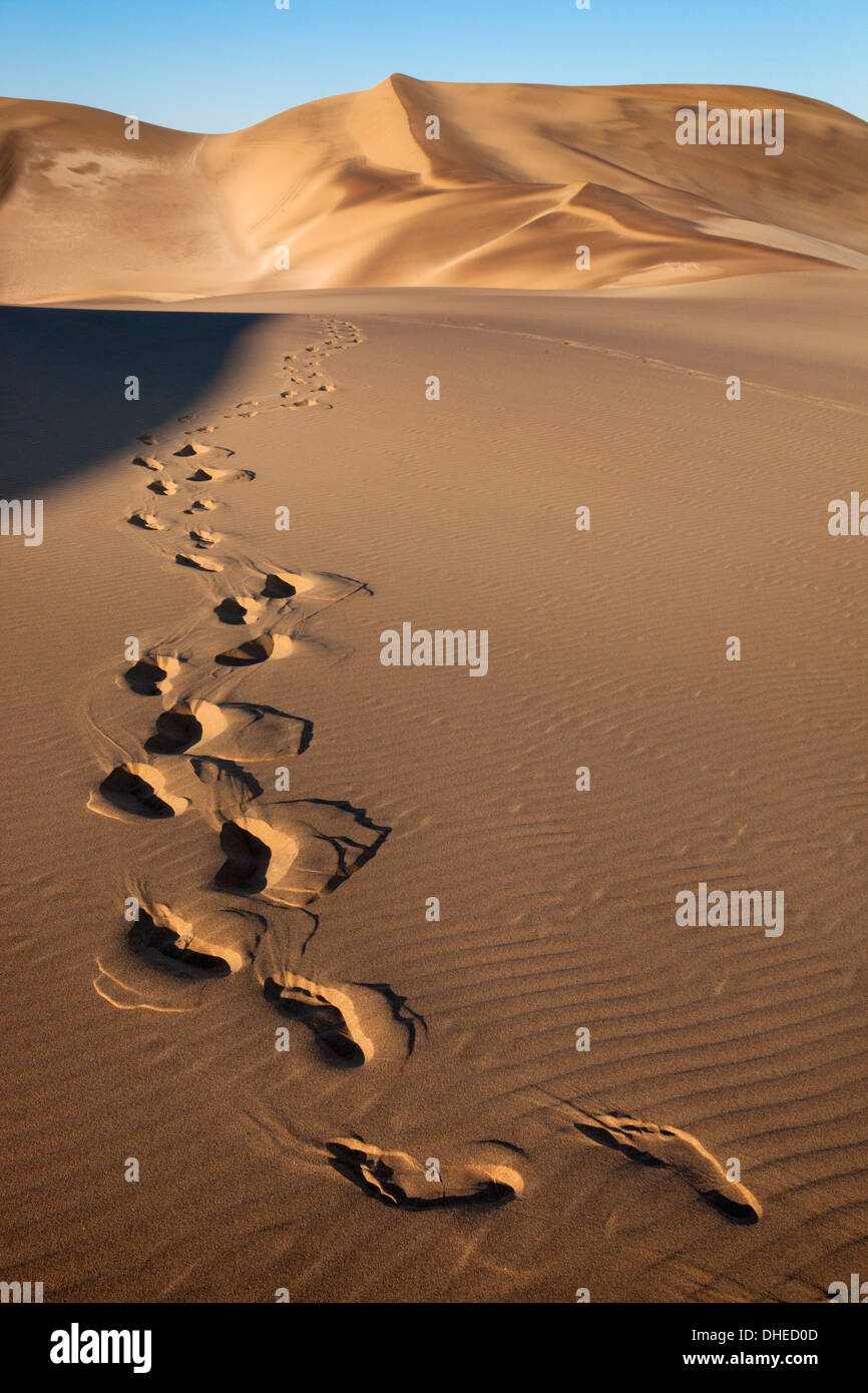 Footprints on sand dunes near Swakopmund, Dorob National Park, Namibia, Africa - Stock Image