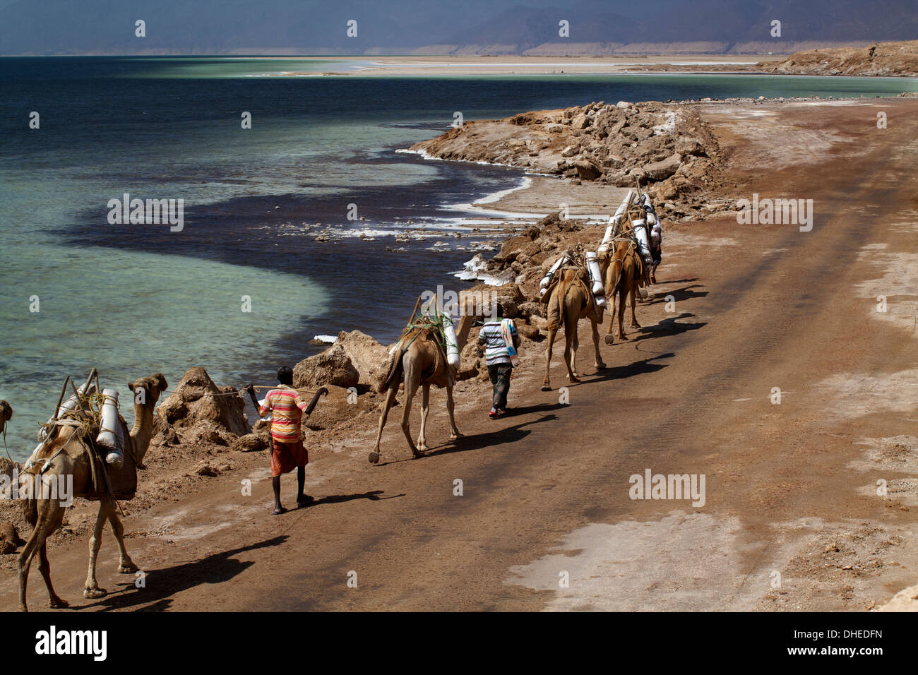 Salt caravan in Djibouti, going from Assal Lake to Ethiopian mountains, Djibouti, Africa - Stock Image